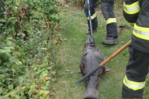 Příroda zaměstnávala hasiče. Lovili bobra vbazénu, pomohli čápovi