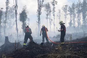 Sedm hasičských jednotek likvidovalo požár lesa na Olomoucku (VIDEO)