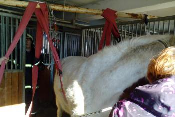 Táborští hasiči si museli poradit, jak postavit nemocného koně zpět na nohy