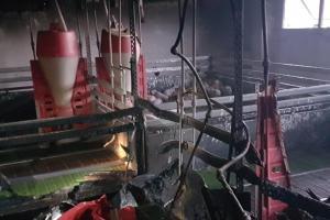 Výhřevný rošt hřál až moc. Hasiči zachránili téměř 400 prasat a selat