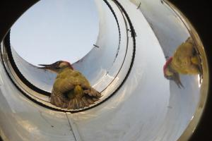 Hasiči vytahovali ptáka. Uvízl ve světlovodu rodinného domu v Luhačovicích