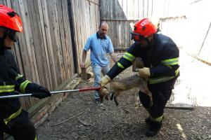 Hasiči nacvičovali odchyt zvířat. Své si s nimi užila liška nebo čáp (VIDEO)