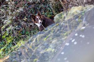 Hasiči zachránili psa po pádu z hradeb. Zřítil se do osmi metrové hloubky