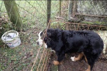 Moravskoslezští hasiči zachraňovali labuť, kuny i salašnického psa