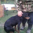 Práce pro hasiče. Pes uvízl v kanalizační rouře a přežil. Kuna bohužel ne