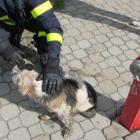 Bezva finta! Při záchraně psa pomohla domácí valašská klobása