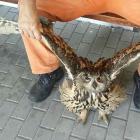 Hasiči z Vysokého Mýta zachránili vzácnou sovu. Pomoc přišla v pravý čas