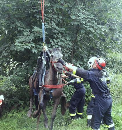 Nedobrovolný zábal v bahně. Vysílenou kobylu zachraňovali hasiči