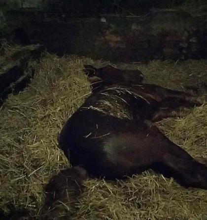 Hasiči v Dlouhé Třebové zachraňovali nemocného a zaklíněného koně