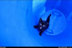 Kotě v kanalizaci a jeho velký nářek. Ostravští hasiči ho zachránili (VIDEO)