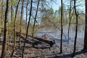 Požáry lesa neustávaly ani na Velikonoční pondělí. Hořelo na Mladoboleslavsku